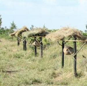 Une barrière de ruches à l'entrée d'une parcelle agricole.
